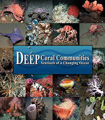 photo montage of sea life