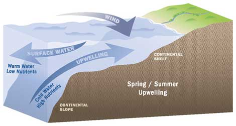 Upwelling illustration
