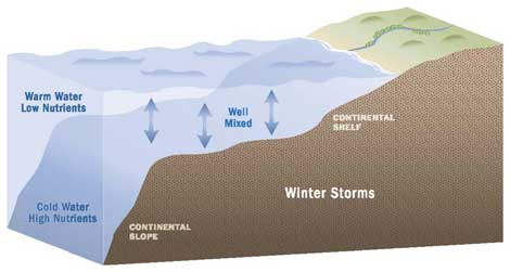 Winter storm illustration