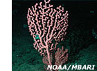 photo of pink coral