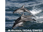 photo of pacific whate dolphins swimming