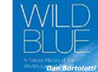 photo of wild blue book cover