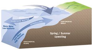 upwelling season