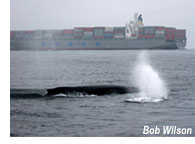 whale and ship in close proximity