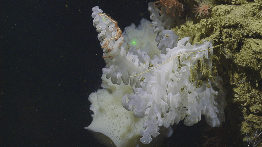 a white sponge in deep water