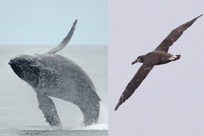 left: a breaching whale right: a seabird
